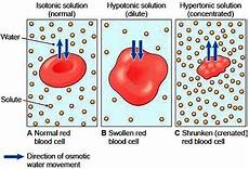 what type of transport is osmosis movement through the membrane amazed at bio