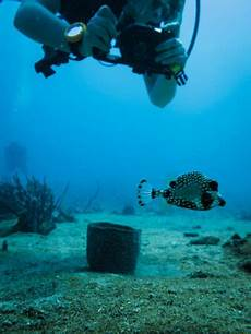 What Do Wildlife Biologists Do Dive Into A Marine Biologist Career At Community College