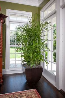 Low Light Pet Safe Indoor Plants 15 Air Purifying Plants You Need In Your Home Bathroom