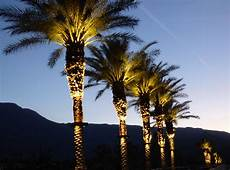 Light Up Palm Tree Stella Bradley Lighting