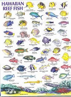 Reef Fish Identification Chart Hawaiian Reef Fish Guide