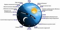 Circadian Rhythm Chart The Science Of Circadian Rhythm Led Lighting