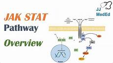 Jak Stat Pathway Jak Stat Signaling Pathway Youtube