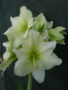 immagini piã di fiori foto di mazzi di fiori bellissimi