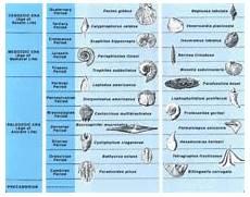 Fossil Record Chart List Of Index Fossils Wikipedia