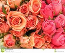 bed of roses stock photo image of bright feminine