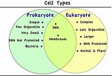 Prokaryotes Vs Eukaryotes Microbiology Prokaryotic And Eukaryotic Cells Google