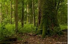Malvorlagen Urwald Europa Im Letzten Urwald Europas 1 Foto Bild Landschaft Wald