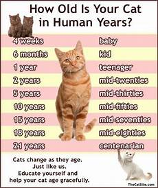 Baby Kitten Age Chart 29 Best Pet Aging Charts Images On Pinterest
