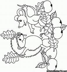Igel Ausmalbild Erwachsene Malvorlagen Herbst Igel 1ausmalbilder Malvorlagen