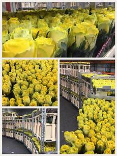 fresco flowers we check pack and supply roses