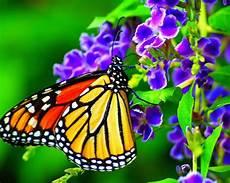 Mariposas Y Flores Fotografias De Mariposas Y Flores Fotografias Y Fotos
