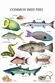 Florida Fish Id Chart Florida Keys Reef Fish Identifier