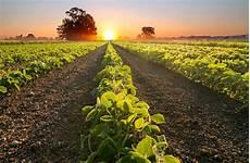 Crop Pricing 5 Startups Improving Crop Yield Forecasting Nanalyze