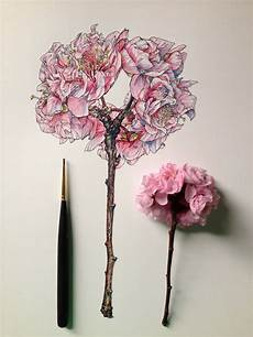 Drawings Of A Flower Flowers In Progress Scientific Illustrator Taunts Us With
