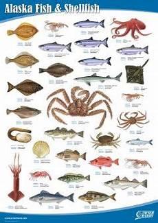 Shellfish Chart Alaska Fish And Shellfish Fish Chart Fish Shellfish
