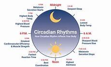 Circadian Rhythm Chart Circadian Rhythm What It Is Why It S Important And How