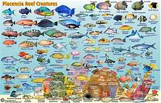 Reef Fish Identification Chart Belize Maps Dive Fish Id Cards