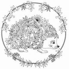 hedgehog coloring page design ms mandalas para