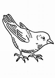 Malvorlage Vogel Kostenlos Kleiner Vogel 3 Ausmalbild Malvorlage V 246 Gel