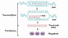 Transcription Biology Deep Learning About Transcription Factor Dna Binding