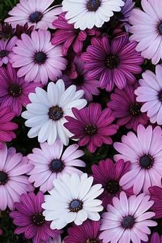 flower wallpaper we it background hintergr 252 nde hintergrund flower blumen we