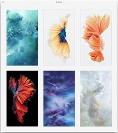 iphone 6s live wallpaper get the beautiful live wallpapers from iphone 6s as still