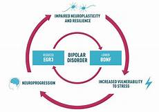 Bipolar Disorder Chart A New Path Into Bipolar Disorder Comes To Light