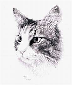 Cat Drawing Images 18 Cat Drawings Art Ideas Sketches Design Trends