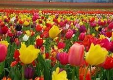 ma le canzoni come fiori regalopolis il colore dei fiori