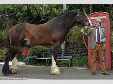 Now that's getting on your high horse: He's 10ft tall