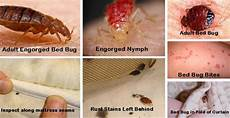 How Do You Get Bed Bugs How To Find And Get Rid Of Bed Bugs In Your Home Dengarden