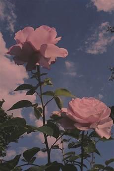 Aesthetic Flower Wallpaper Iphone pin by firyangizdorfhi dorfhi on photography aesthetic in