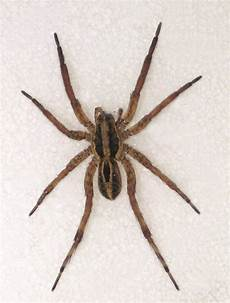 Oklahoma Spiders Identification Chart Epp 7301 Spiders Brown Recluse Black Widow And Other