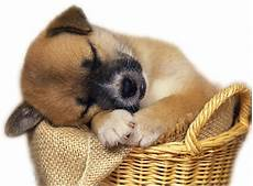 Animal Baby Sofa Png Image by Wirral Food Food Supplier Directory