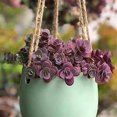 plantas penduradas ao ar livre a imagem pode conter planta flor e atividades ao ar