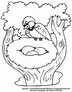 Malvorlage Vogel Zum Ausdrucken Vogel Malvorlagen Kostenlos Zum Ausdrucken Ausmalbilder
