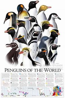 Types Of Penguins Chart Wiinterrr S Day Know Your Penguins A Helpful Chart