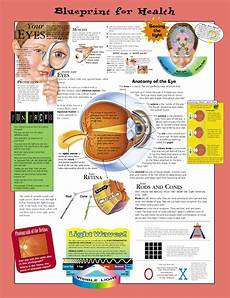 Healthy Chart Blueprint For Health Your Eyes Anatomical Chart Paper