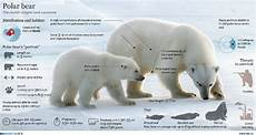 polar size chart infographics arctic education amp outreach programs