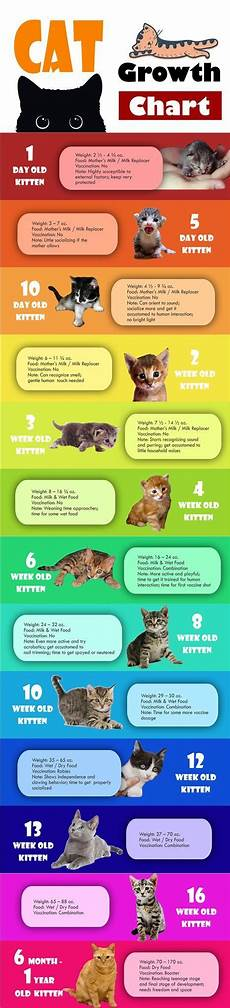 Baby Kitten Age Chart Pin By Fully Feline On Life With A Cat Cats Kittens