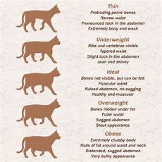 Average Cat Weight Chart What Should Be The Ideal Weight Of Your Pet Cat Cat Appy