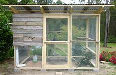 Chicken Shed Designs Australia The Chicks Have Arrived And Chicken Coop Construction