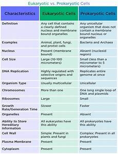 Difference Between Prokaryotic And Eukaryotic Eukaryotic Cell Definition Amp Examples Expii
