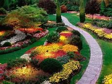 sempreverdi da giardino cespugli da giardino fioriti sempreverdi i nostri consigli