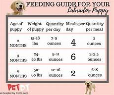 Labrador Puppy Food Chart India Labrador Puppy Food Chart Dogs Breeds And Everything