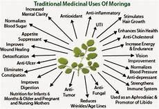 Moringa Chart Girlsaffair Health Benefits Of Morninga Plant Moringa