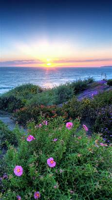 iphone wallpaper nature flowers pacific sunset flowers shore iphone 6 wallpaper hd free