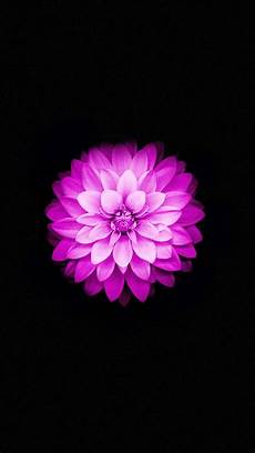 Purple Flower Wallpaper Iphone 6 by Apple Iphone 6 Lotus Iphone 5s Wallpaper Iphone 5 Se