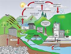 What Effect Does Human Activity Have On Many Ecosystems How Do Humans Impact The Water Cycle Example